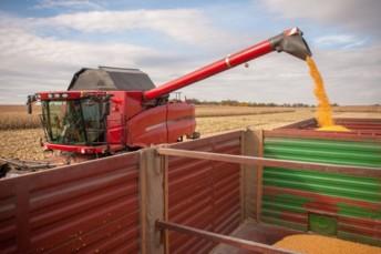 La sécheresse au Brésil impact les cours de nombreuses matières agricoles partout dans le monde, maïs, blé et soja en tête.