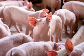 L'étiquette bien-être animal informe les consommateurs à la fois sur le niveau de bien-être animal et sur le mode d'élevage, et répond à l'ensemble des recommandations du groupe de travail de la Commission européenne sur la labellisation du bien-être animal (conclusions publiées en juin 2021).