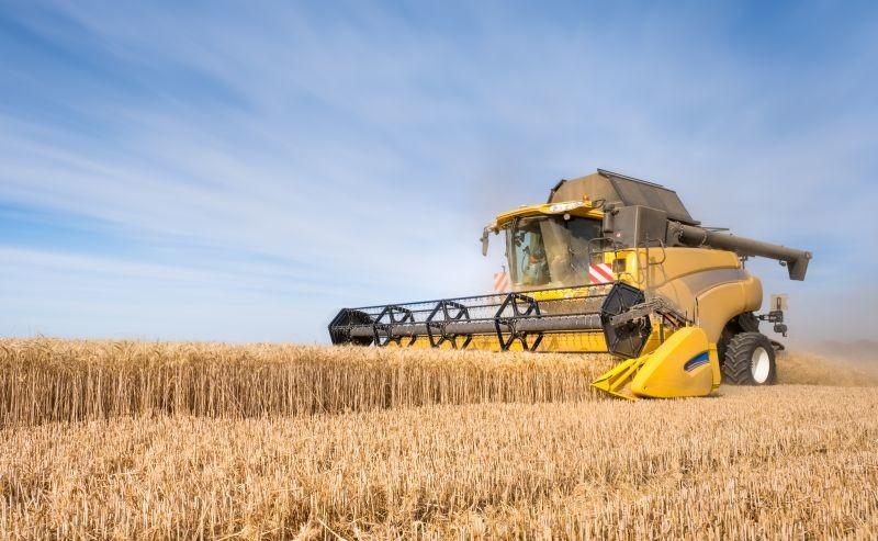 D'après le service de prospective du  ministère de l'Agriculture et de l'Alimentation, les rendements de blé tendre atteignent 76,1 q/ha. Crédit photo Adobe shocky