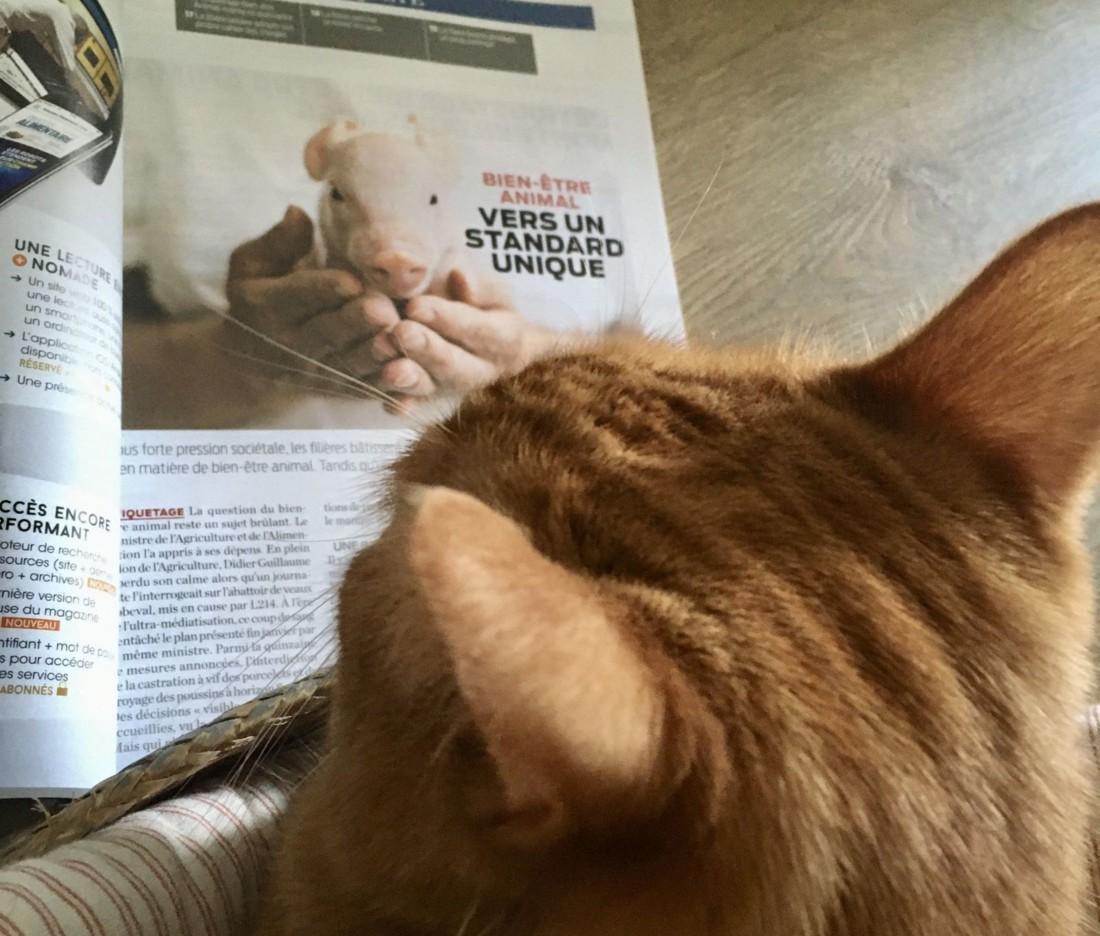 Le magazine Process Alimentaire poursuit son activité grâce au télétravail des journalistes à leur domicile. Le site web connaît des scores d'audience inégalés. Tandis que le numéro d'avril sera bel et bien imprimé et livré. Ici le bureau de Marjolaine Cérou, sous le regard attentif de son chat Rudolf.