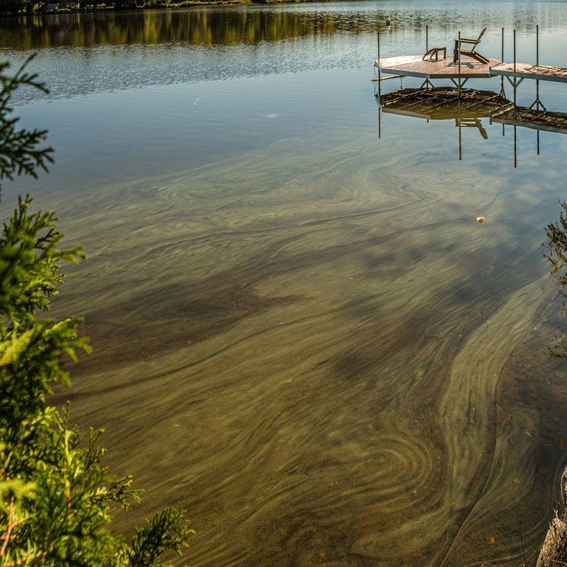 Dans son dernier avis, l'Agence nationale de sécurité des aliments préconise de renforcer la surveillance des cyanobactéries, productrices de cyanotoxines dans les eaux de boissons. Elle actualise aussi ses recommandations pour la consommation de poissons d'eau douce. Crédit : Adobe Stock.
