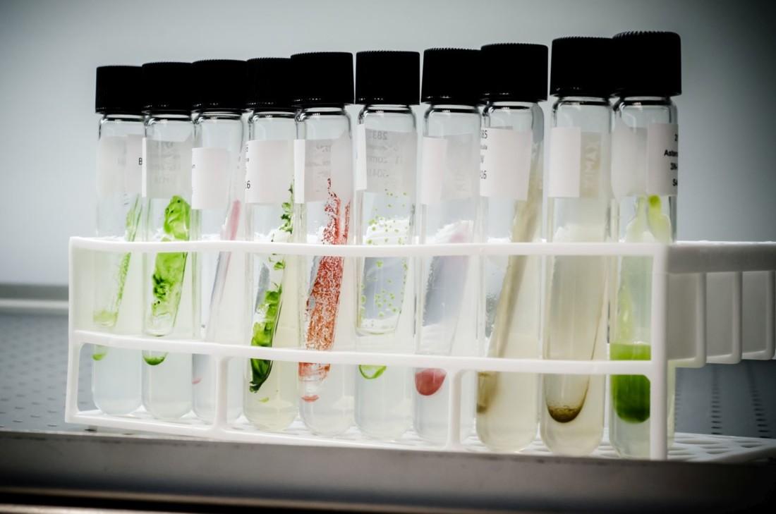 Fermentalg s'associe à Immunrise et Pot au Pin Energie pour expérimenter au sein d'une usine de méthanisation le fonctionnement d'un puits de carbone dont la biomasse peut être valorisée en agriculture en tant que traitement antifongique naturel. (Crédit : Fermentalg))
