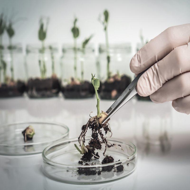 Une étude sur les nouvelles techniques génomiques publiée par la Commission européenne ouvre de nouvelles perspectives sur l'évolution de la législation sur les OGM. Une consultation publique va être ouverte. Crédit : Adobe Stock.