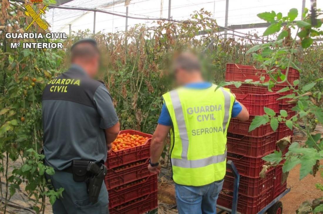 L'action européenne Opson, coordonnée par Europol et Interpol, s'est intéressée cette année aux produits bio. La DGCCRF a participé à l'opération. Suite aux diverses inspections, neuf personnes ont été arrêtées par la garde civile espagnole. Crédit: Europol.