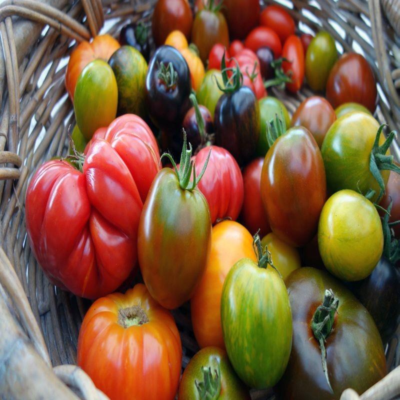 Depuis la fraude des 15 000 tonnes de kiwis, la DGCCRF a renforcé ses actions sur la francisation des produits. Un cas de tromperie sur l'origine de tomates a été mis à jour par les autorités. Crédit: Adobe Photo Stock.